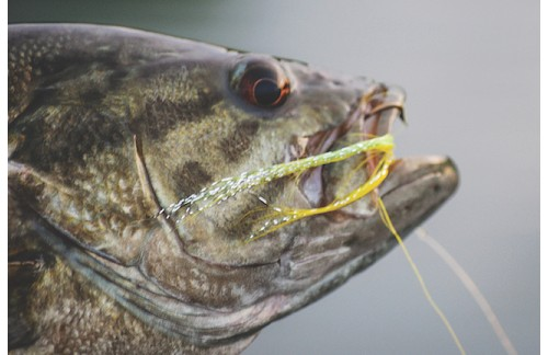 Five General Mistakes in Smallmouth Fly Fishing