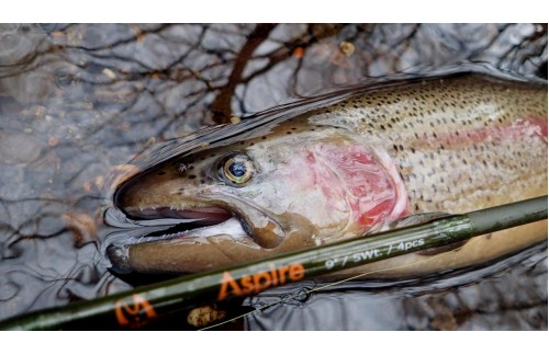 The Best Rod for Sasquatch Fly Fishing