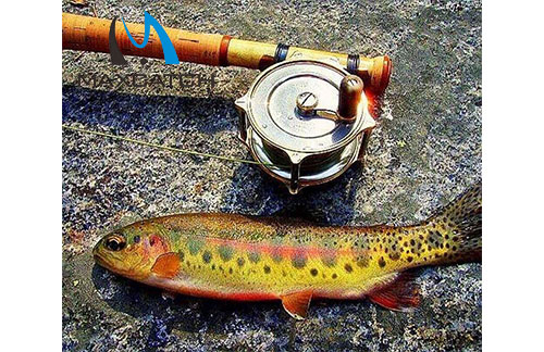 You should be aware of antique fly fishing reels
