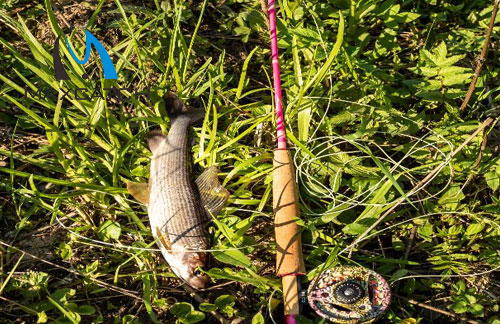 What is Antique Fly Fishing Tackle?