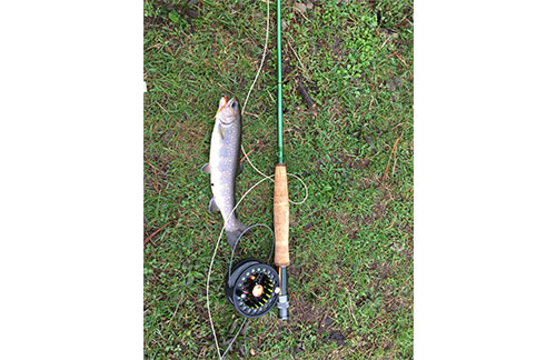 How to get the bamboo fly fishing rods