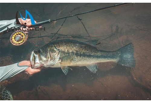 Why Makes Berkley Fly Fishing Rods Excellent