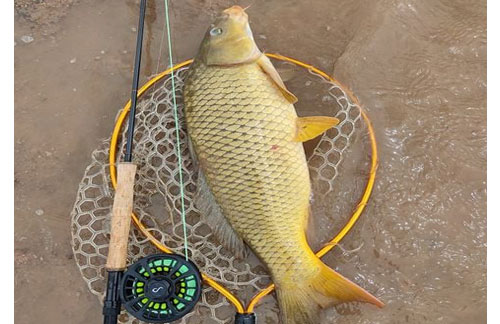 The Best Colorado Fly Fishing Guides for Newbie And Seasoned Anglers