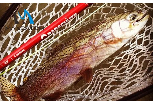 How to Buy the Best Fly Fishing Landing Net?