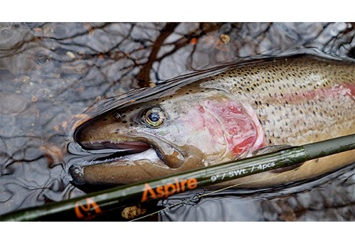 How to book fly fishing trips in Boise city