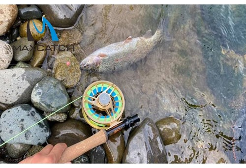 How to Learn Brown Trout Fly Fishing Tips?