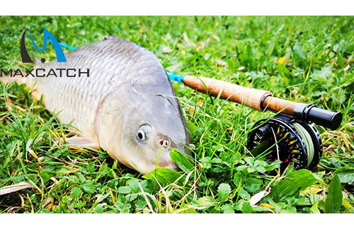Major features of carp fishing with a fly rod