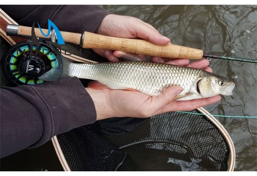 How to Approach Carps in Carp Fly Fishing