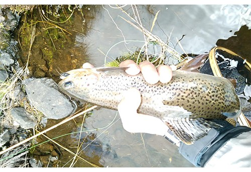 How to learn fishing experience through craig montana fly fishing