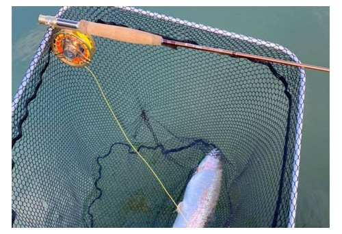 What You Need to Know about Upper Delaware River Fly Fishing