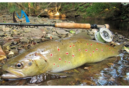 How to Select DR Slick Nail Knot Fly Fishing Nippers?