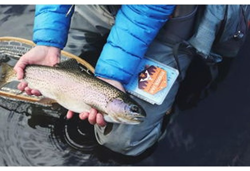 Advantages of learning fly fishing in boise idaho