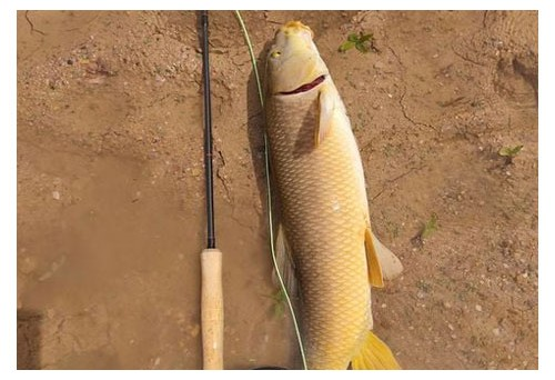 What is Fly Fishing Arkansas? Why are Many People Fishing Here?