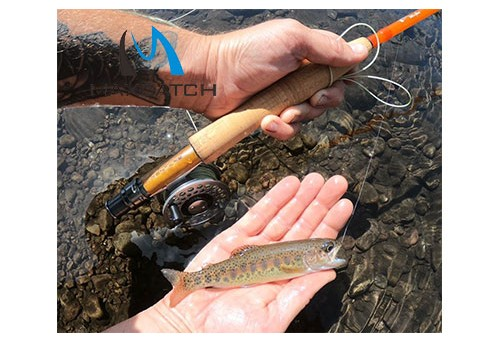 5 Tips for Planning Fly Fishing International Trips