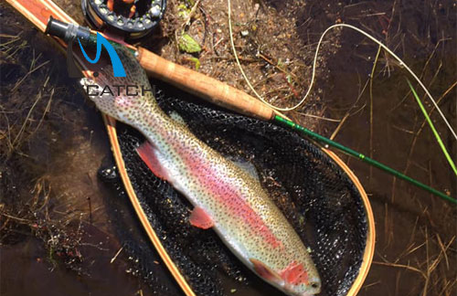 What Is a Shopping Experience with a Fly Fishing Tackle Ireland Shop?