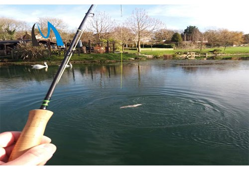 Where to go fishing in Jackson hole fly fishing