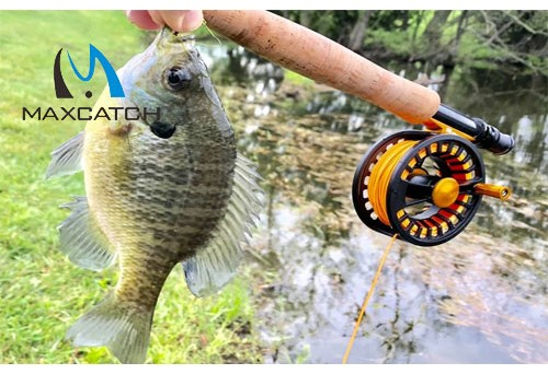 What is the lure to catch bluegill?