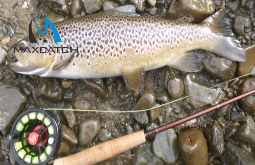 What Type of Fish is Best with Your Martin Fly Fishing Reel?