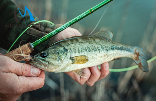 How to Buy Old Fly Fishing Rods And Reels?