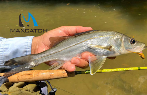 Saltwater Fly Fishing From Shore Vademecum For Beginners