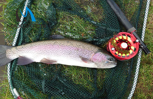 What should you prepare before go trouts fly fishing?