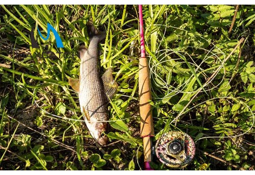What is the best season in Yellowstone river fly fishing?